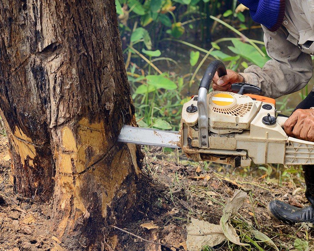 Tree Service Philadelphia - Tree Removal