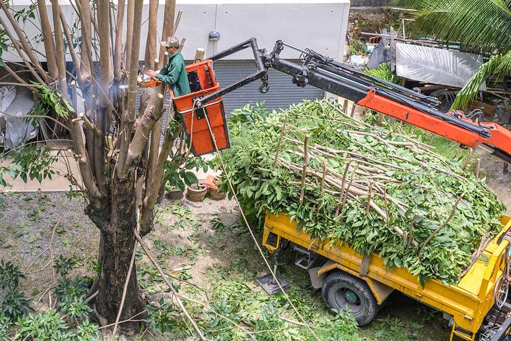 Philadelphia Tree Service Experts