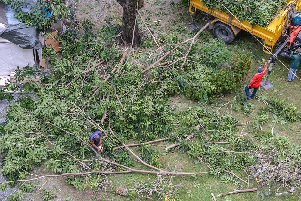 Tree Service Philadelphia - Tree Trimming